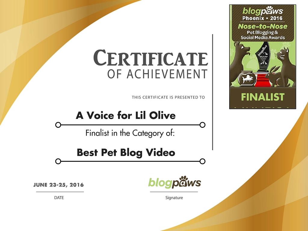 Video_Voice